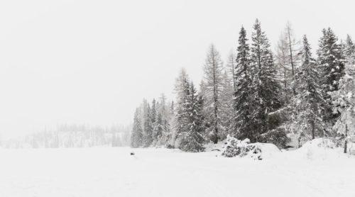 Zasněžená krajina